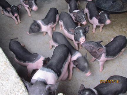 善待饲养动物,让它们在舒适环境下生活